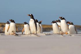Для многих современных путешественников Антарктика остается последним неизведанным рубежом