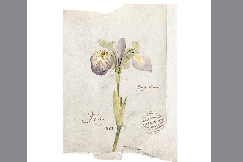 Ирис звучит в базе аромата и является любимым цветком Tiffany