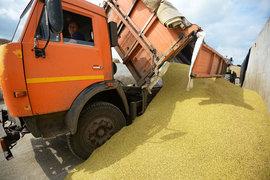 Производители не хотят экспортировать зерно по нынешним ценам