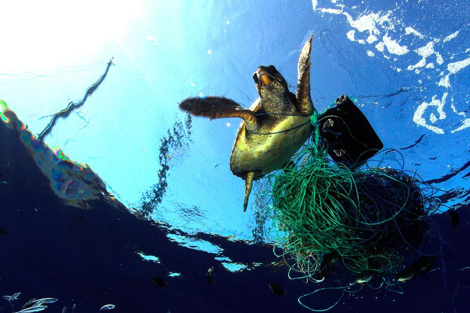 Швейцарский часовой бренд Breitling примет участие в одной из инициатив  Ocean Conservancy – в программе проекта International Coastal Cleanup,  цель которой –  глобальная очистка пляжей
