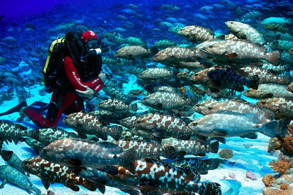 Подводные исследователи каждой экспедиции, поддерживаемой фондом  Blancpain, совершают погружения в часах из серии Fifty Fathoms Ocean Commitment
