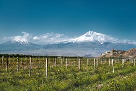 Виноградники Араратской долины