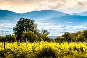 Винодельческое хозяйство Nelkarisi