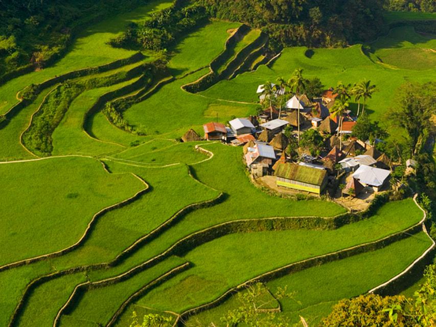 Рисовые террасы в Банауэ