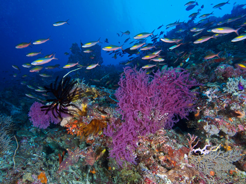 Национальный морской парк Риф Туббатаха