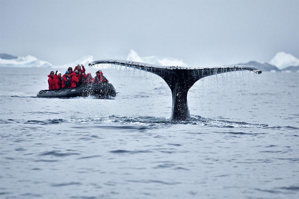 «Фотосессия» с китом