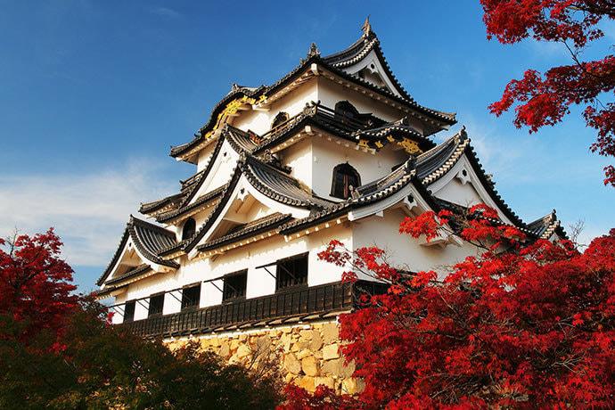 В эпоху Мэйдзи предполагалось снести множество замков, однако Хиконэ был  сохранен по требованию самого императора, путешествовавшего в этих  краях