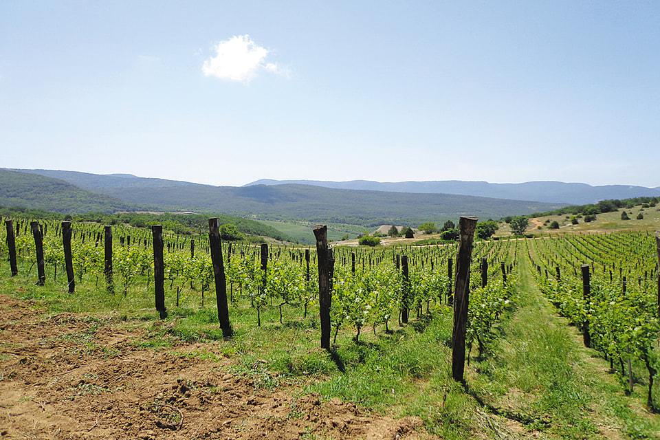 Винодельческое хозяйство UPPA Winery Павла Швеца расположено между Севастополем и Ялтой. А вина поставляет в Петербург. И не только.