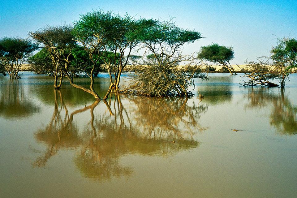 Мангровые леса Аль-Такира