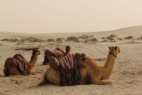 До некоторых мест здесь можно добраться лишь на верблюде