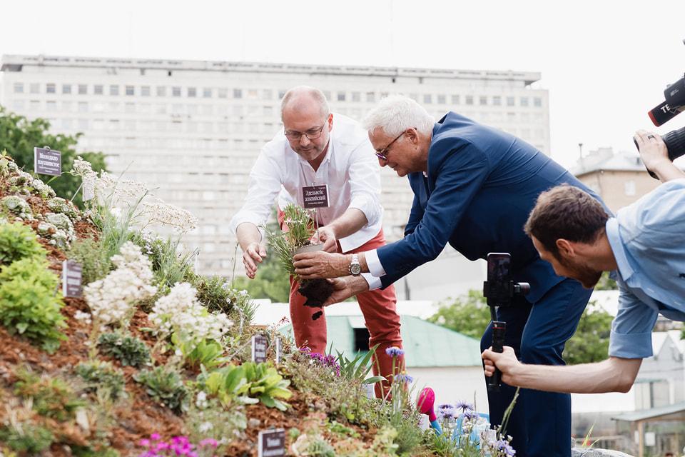 Ландшафтный архитектор Ботанического сада МГУ Артем Паршин и  совладелец Clarins Group Кристиан Куртен-Кларанс сажают эдельвейс альпийский на вершине Альпийского Бельведера