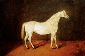 Прародитель орловского рысака серебристо-белый   арабский жеребец Сметанка – самая дорогая лошадь в истории России