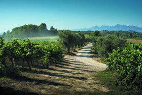 С виноградников Финка Парера открывается вид на Монсеррат