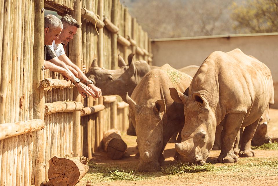 Hublot сотрудничает с организацией SORAI, главная цель которой – сохранить популяцию носорогов на планете