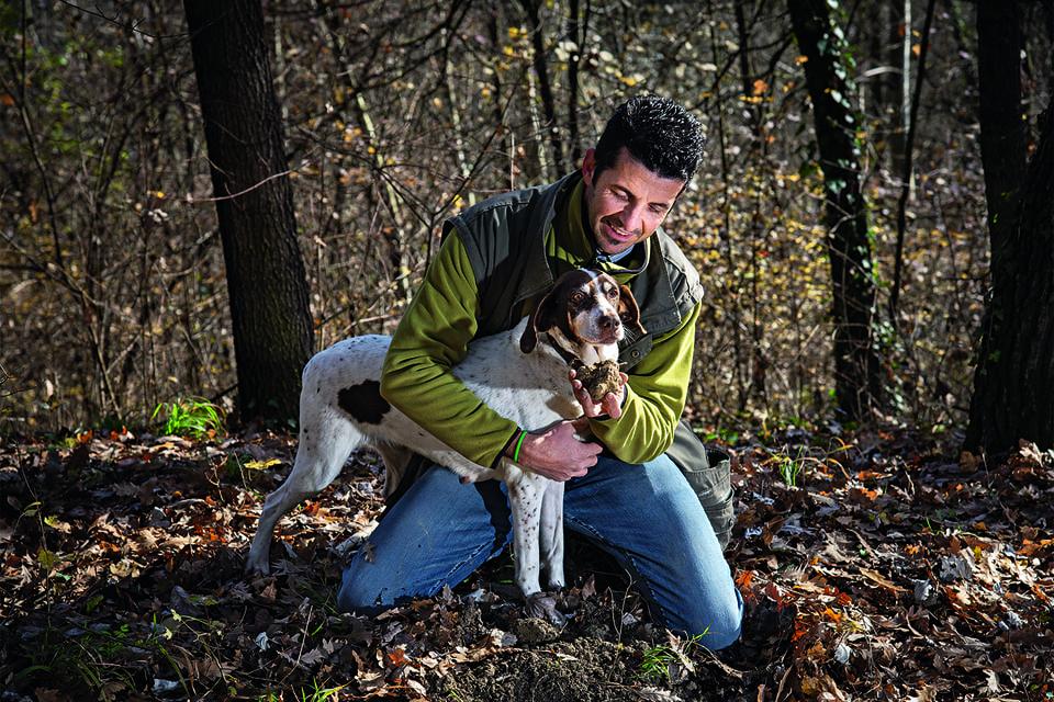 Места, где сборщики-трифуалы с помощью специально обученных собак собирают трюфели, держатся в секрете