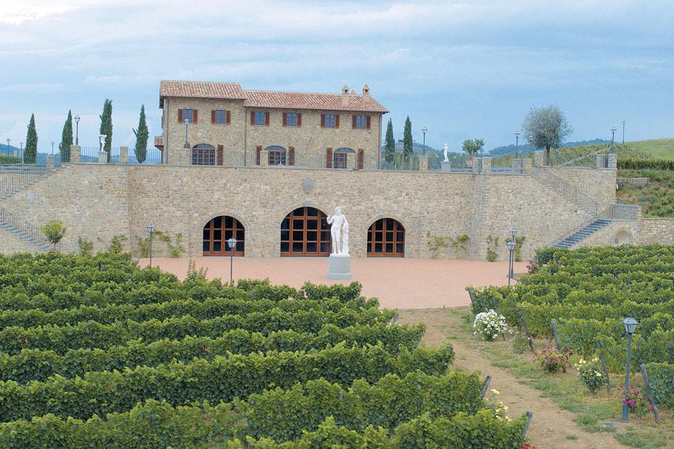 На территории вокруг фабрики в Соломео высажены виноградники