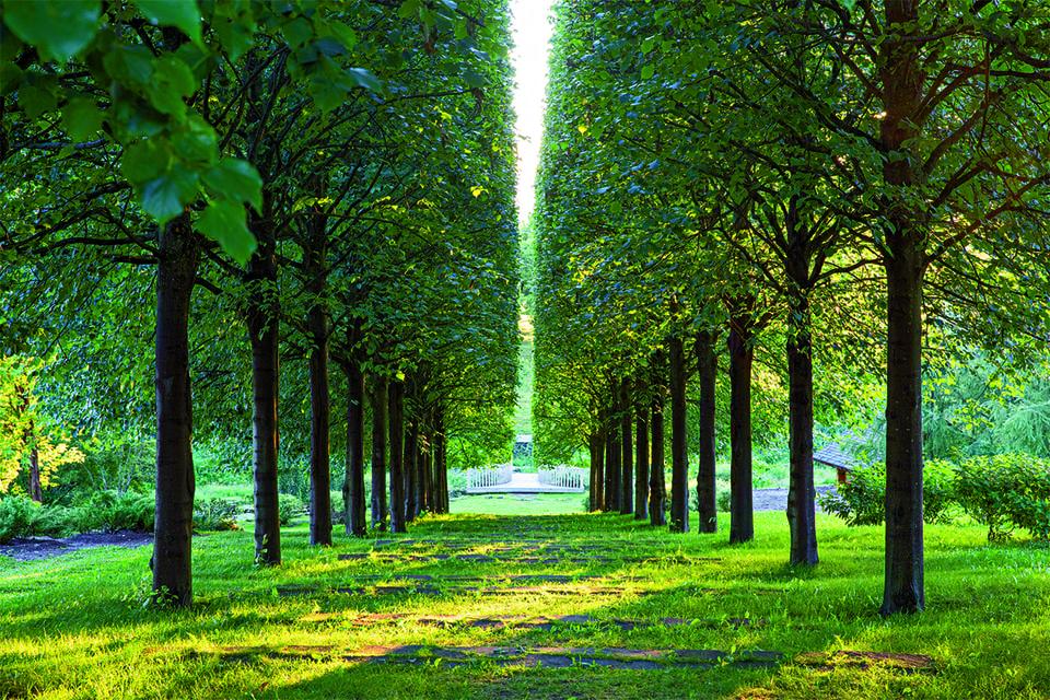Употребив опыт и приобретенные знания, 5 га Ореховно мастер превратил в наглядную энциклопедию европейских садовых стилей