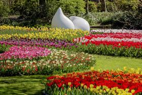 Всемирный день цветов отмечают ежегодно 21 июня. На фото – парк Кекенхоф в Нидерландах