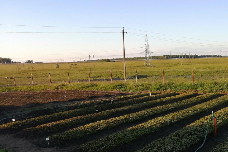 За два года высажено более 5 млн семян кедра