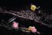 Кольца с крупными желтыми и розовыми бриллиантами из коллекции Colored Diamonds от Messika