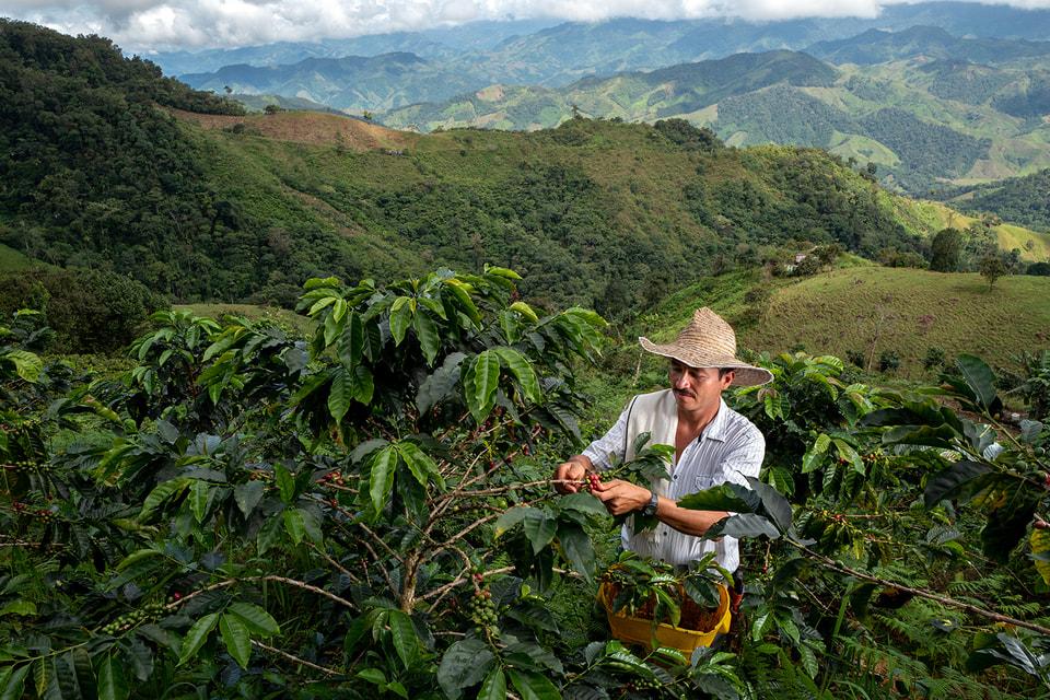 Фермеры кофейных плантаций Колумбии за работой