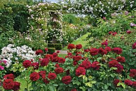 Розарий Дэвида Остина состоит из четырех садов: Lion Garden (нафото), Long Garden, Victorian Garden иRenaissance Garden