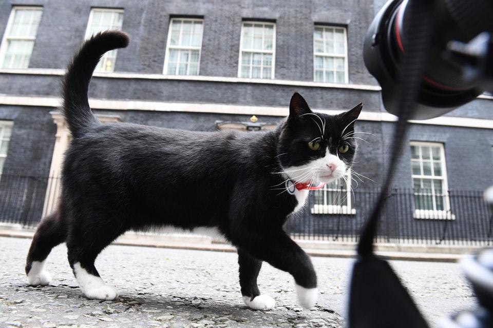 Этот черно-белый кот получил свое имя в честь министра иностранных дел, а затем и премьер-министра Генри Палмерстона (1784–1865)