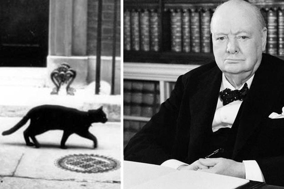 Сэр Уинстон Черчилль обожал котов, включая Мюнхенского Мышелова