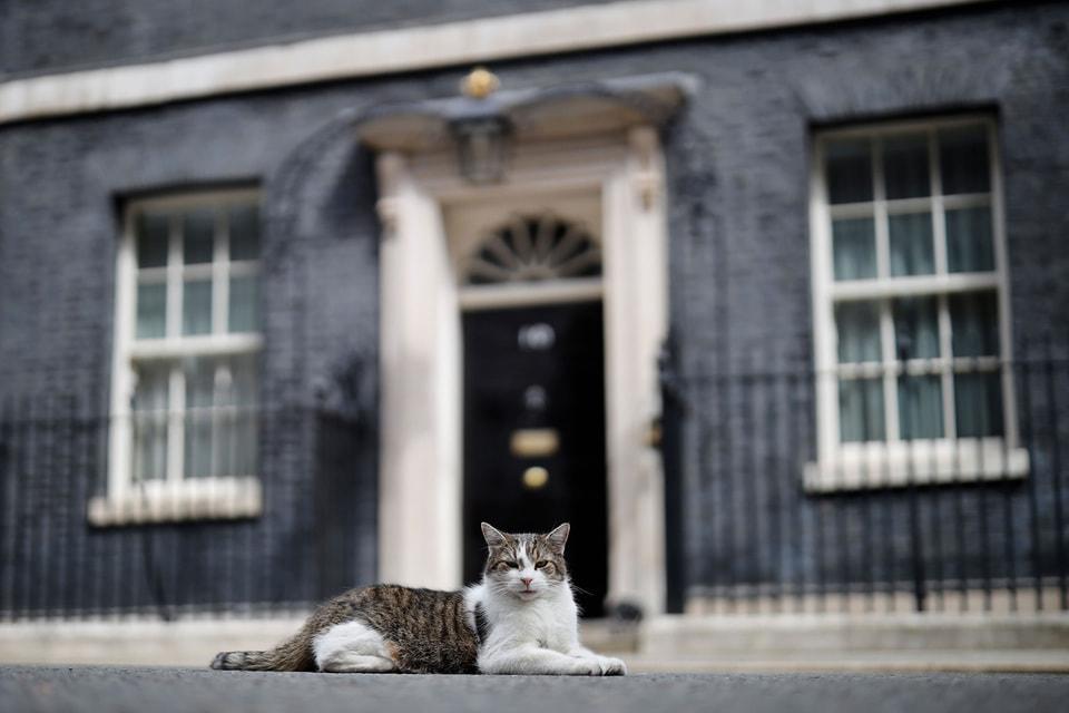 Жизнь котов на Даунинг-стрит далеко не всегда бывает радужной: некоторым политикам не по душе эти животные