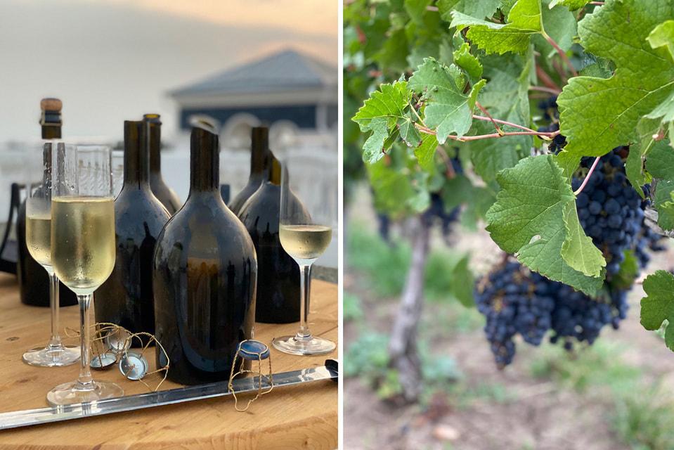 Традиции виноделия на Тамани появились во II веке до н. э., когда греки основали поселение Фанагория