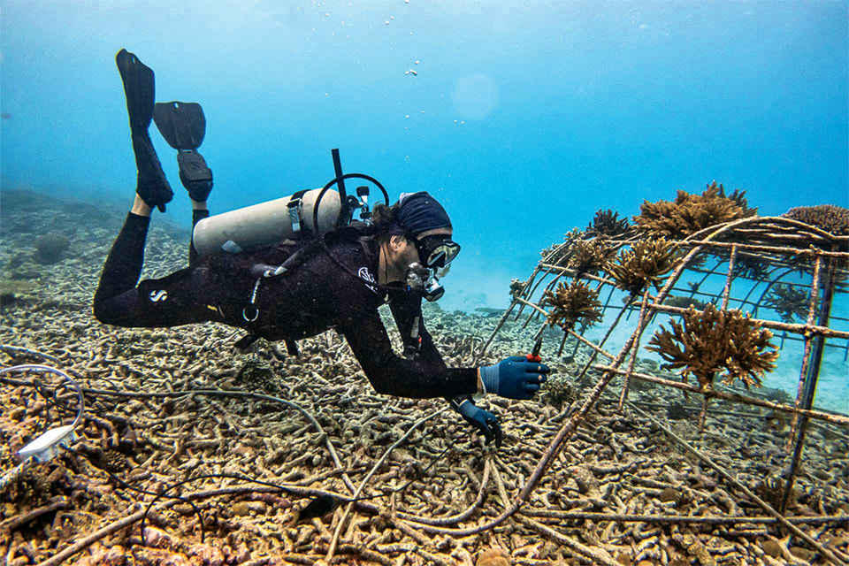 Кадры из экспедиции Mokarran Protection Society в водах Полинезии