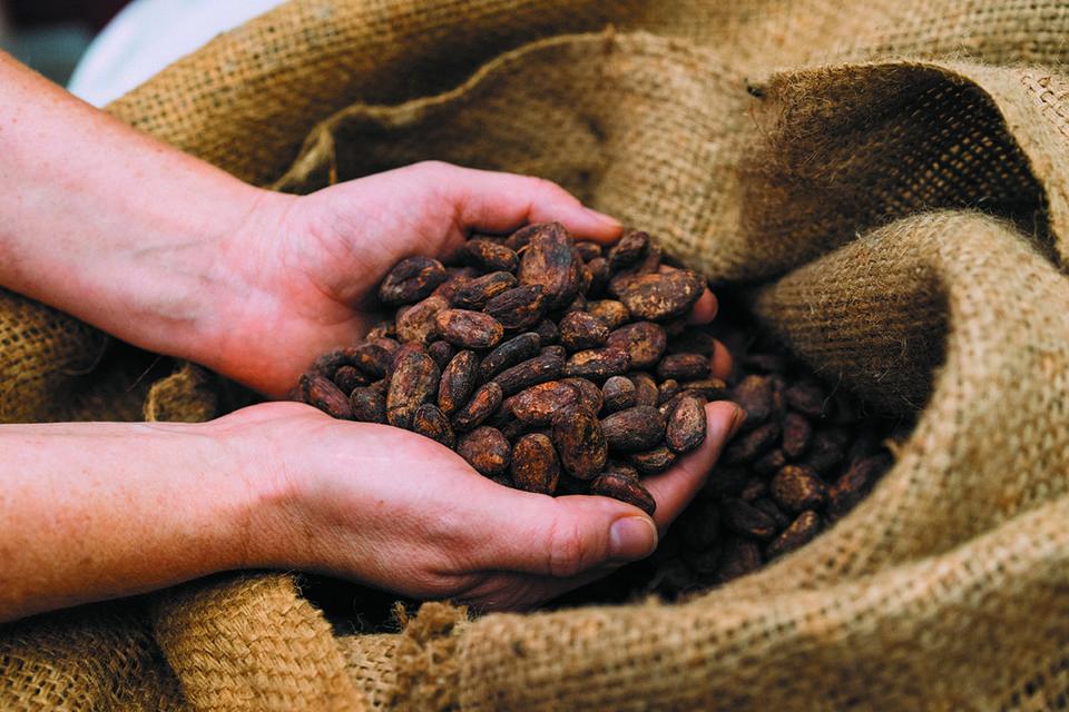 После десяти лет работы в торгово-импортной компании Ольга решилась импортировать партию органических какао-бобов из Эквадора и столкнулась со всеми возможными сложностями