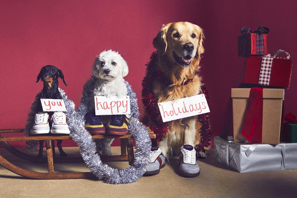 Pawfect Holiday можно перевести как «Распёскрасный праздник»