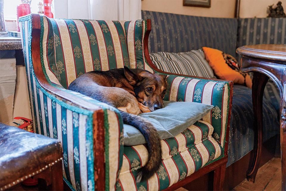 Собака Энди – любимый член семьи