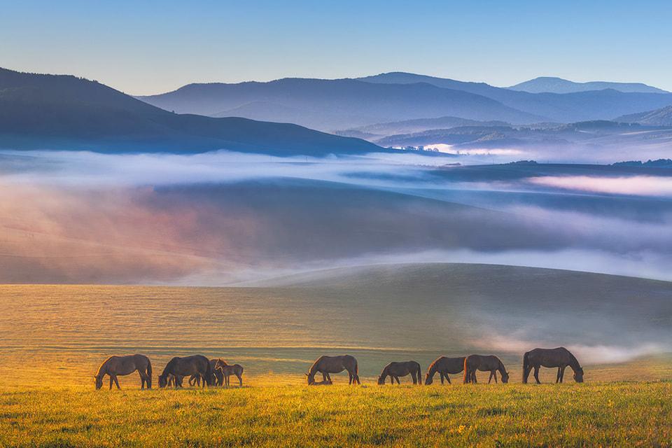 Табун лошадей на Алтае