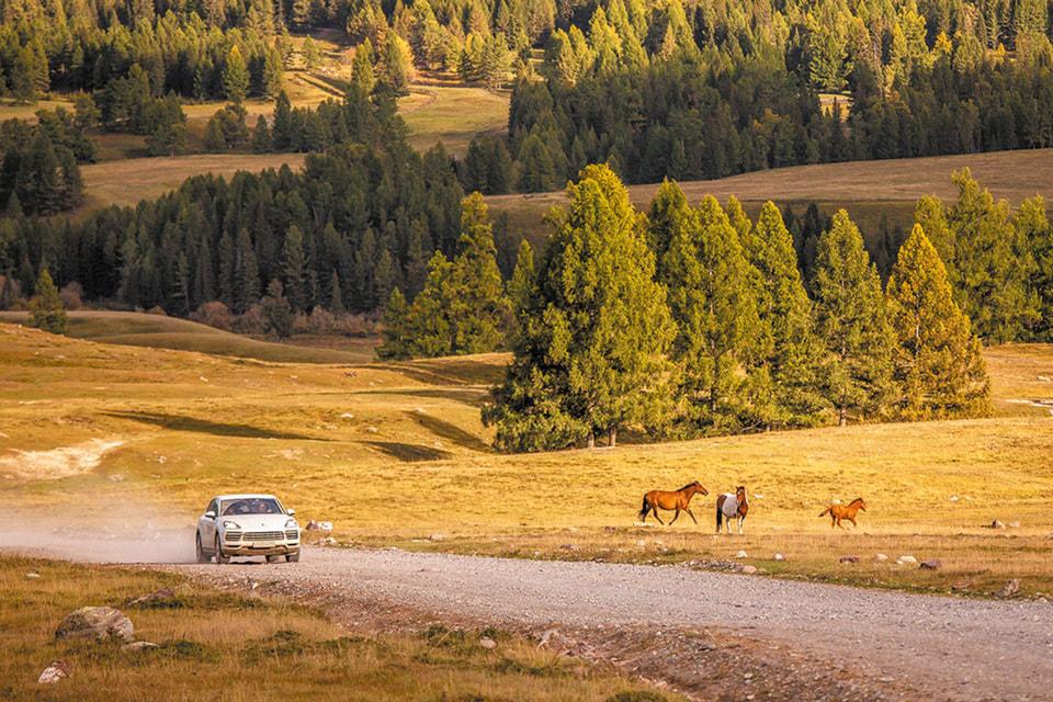 Дорога между перевалом Кату-Ярык и Улаганом