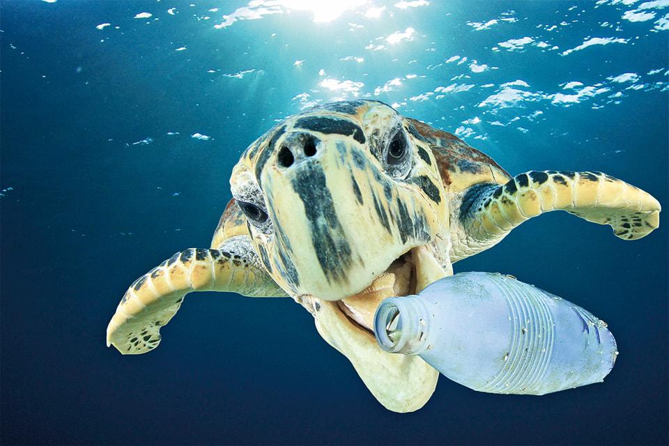 По статистике, пластиковый мусор в океане убивает до 100 000 его обитателей в год