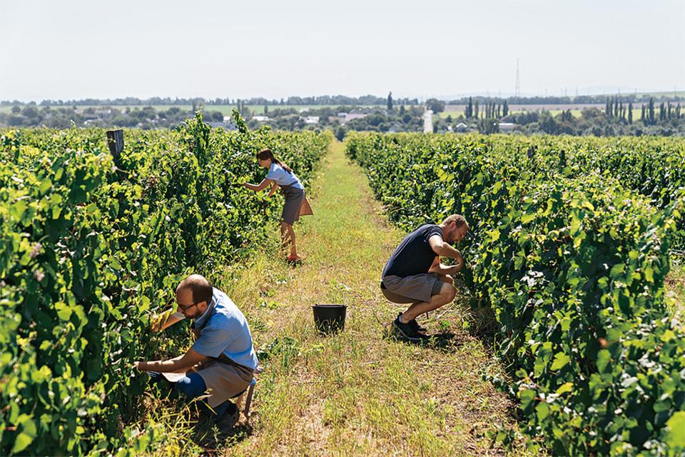 Для изготовления вина в «Лефкадии» используют более 20сортов винограда