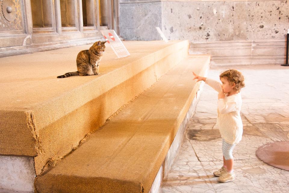 Несмотря на свою независимость, кошки очень привязываются к семьям, в которых живут