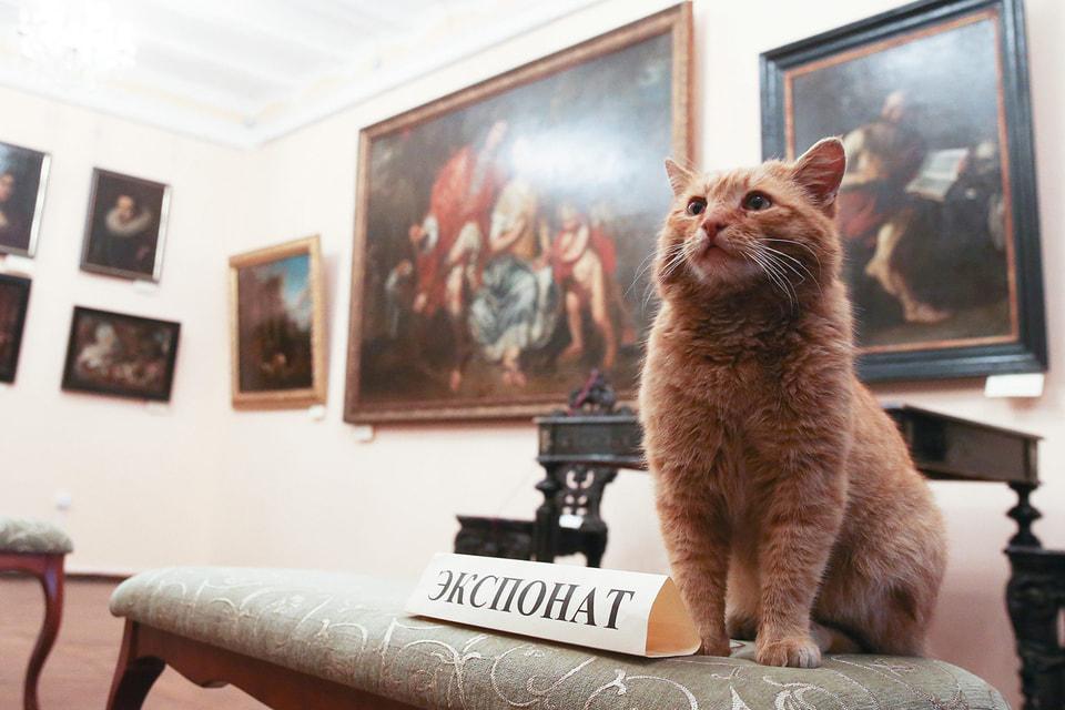 Несмотря на многие тысячи лет существования рядом с человеком, кошки сохранили большую степень независимости