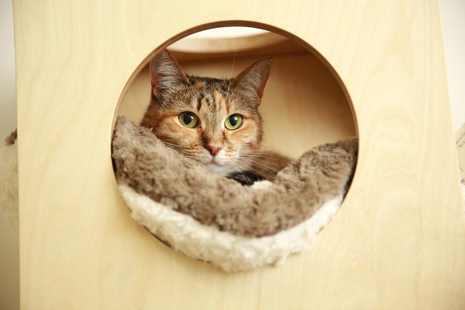 Ученые выяснили, что за тысячи лет кошки, в отличие от других домашних животных, практически не изменились