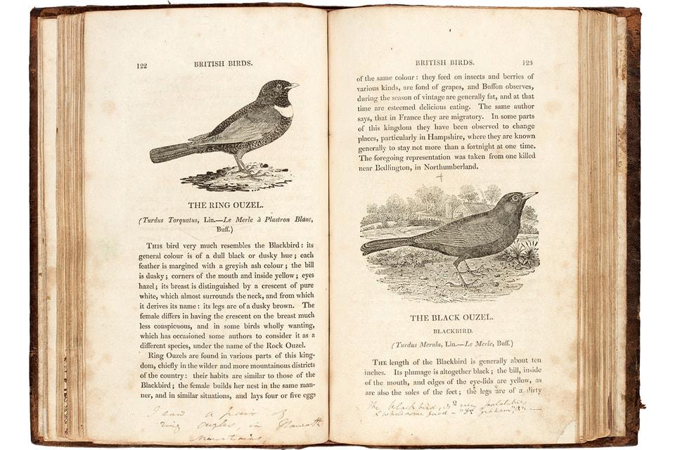 Экземпляр «Истории британских птиц» с иллюстрациями художника Т. Бьюика