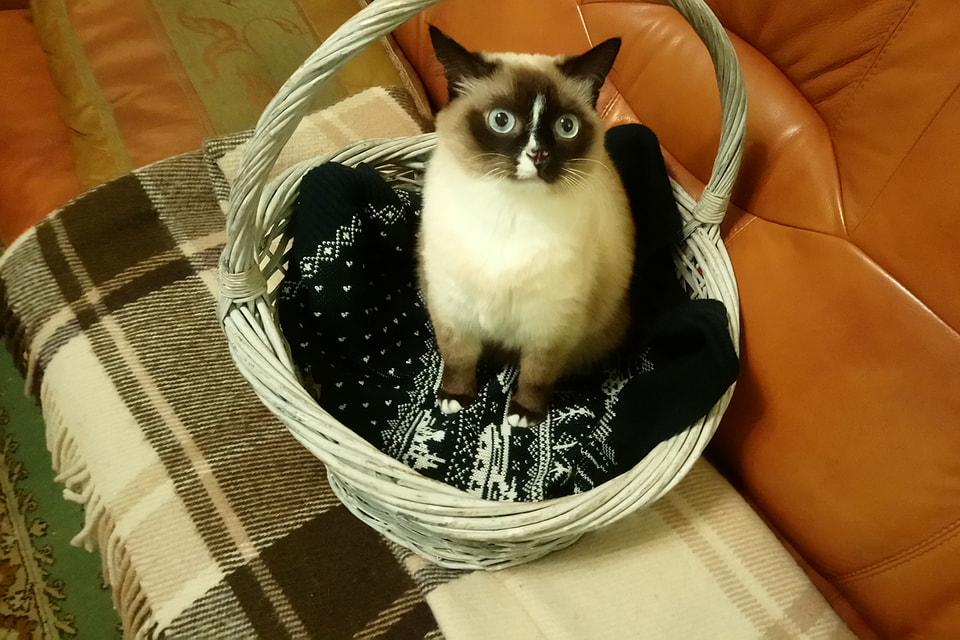 Жительница музея — кошка Сима, найденная на улице 10 лет назад, настоящее сокровище по характеру и уму