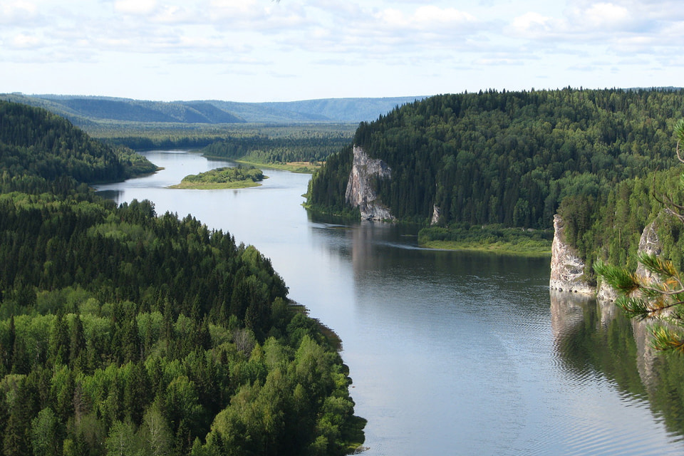 В России все 100% лесного фонда являются собственностью государства